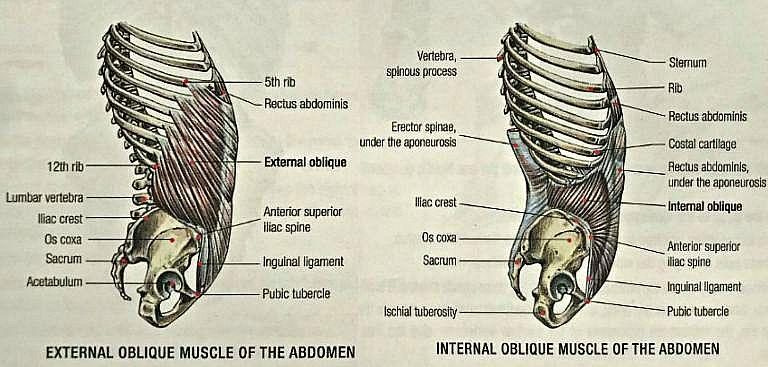 obliques exercises